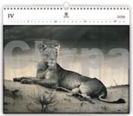 Lioness - dřevěný nástěnný kalendář 2019