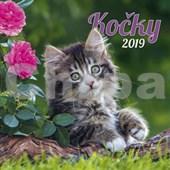 Kočky 2019 - nástěnný kalendář
