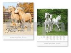 Malý Horses - nástěnný kalendář 2019