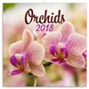 Orchideje - nástěnný kalendář 2018